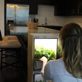 Image Nanofarm, Teknologi Canggih untuk Menanam Sayuran Di Dalam Rumah