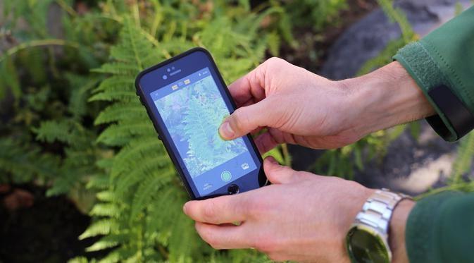 image iNaturalist: Aplikasi yang Bisa Mengidentifikasi Makhluk Hidup